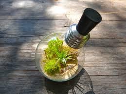 How To Make A Light Bulb 17 Light Bulb Terrarium Diy Ideas Guide Patterns