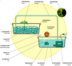 Backyard Fish Farming Tilapia Small Scale Greenhouse Aquaculture Google Search Class