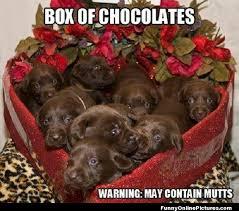 Cute Valentine Meme - funny hot dog valentine meme funny pics story