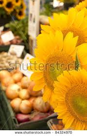 sunflowers for sale sunflowers sale markets table stock photo 84324970
