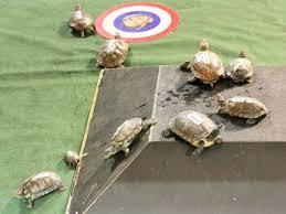 Texas Map Turtle Little Woodrow U0027s Presents Turtle Race Thursdays Event