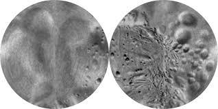 Azimuthal Map Stooke Small Bodies Maps