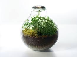 frequently asked questions about terrariums gardening flavours
