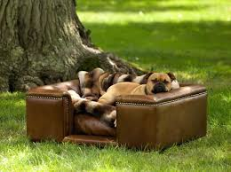 Leather Sofa And Dogs Leather Furniture Durability Sofa Suitable For Dogs Top
