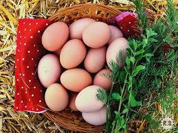les 25 meilleures idées de la catégorie best egg laying chickens