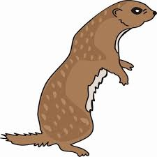 otter coloring pages kids color print