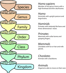 organization of living things read biology ck 12 foundation