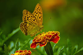 close up of butterfly pollinating on flower free stock photo