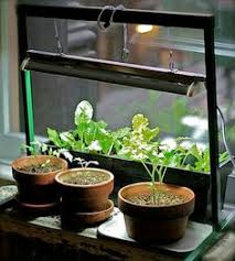 Diy Herb Garden M O O R E A S E A L Diy Indoor Herb Gardens Create Pinterest