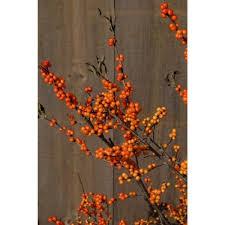 ilex verticillata u0027winter gold u0027 winter gold winterberry holly