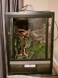 exo terra terrarium tank with live plants and lots of accessories