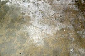 Mold On Basement Walls Cinder Block - how to moisture test your garage floor before you epoxy all