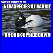 Silly Rabbit Meme - new species of rabbit clean memes