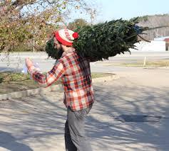 christmas tree seedlings sale christmas lights decoration