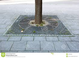 tree base and pavement stock image image of grate 54550955