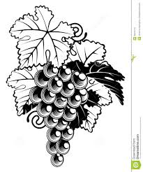grapes on grapevine stock photography image 35474772