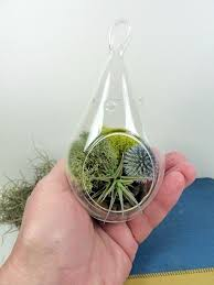 best 25 hanging glass terrarium ideas on pinterest small indoor