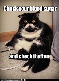 Wilford Brimley Diabeetus Meme - i can has cheezburger diabeetus funny animals online cheezburger