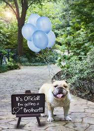 gender reveal announcement ideas 15 ways to announce your baby s gender gender reveal gender and dog