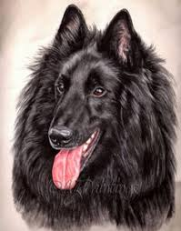belgian sheepdog epilepsy top unusual cat breeds on earth to be anxiety and language