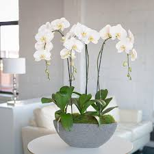 white orchids orchid arrangement granite trio with white orchids orchid
