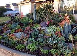 Rock Garden Succulents 1027 Best Garden Succulents Images On Pinterest Succulents