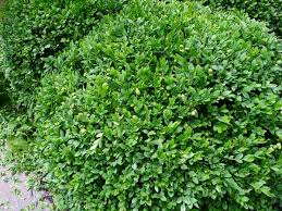 grã npflanzen fã r balkon 54 best garden images on canopies diy pergola and