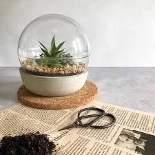 concrete terrarium succulent planter by ovo bloom