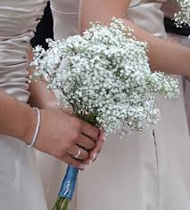 baby s breath bouquets babys breath bridesmaid bouquet bridesmaid bouquet