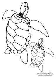 loggerhead sea turtle coloring bookkeeper assistant sample