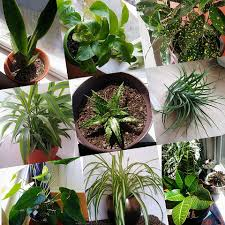 10 beautiful houseplants for spring my peace love life