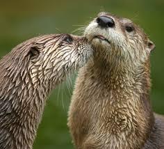 Northern Michigan Wikipedia by North American River Otter Wikipedia