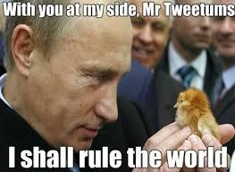 Putin Meme - 20 vladimir putin memes you should totally see sayingimages com