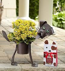 Dog Flower Arrangement Flowers Birthday Wishes Rose Plant Flower Arrangements Price