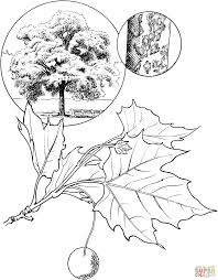 autumn big trees in autumn with autumn leaf coloring page