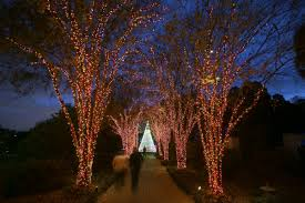 atlanta botanical garden lights atlanta restaurant reviews by atlanta foodies