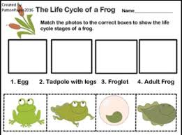 the 25 best frog life cycles ideas on pinterest spring cycle