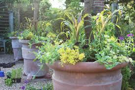get gardening scrambles and climbers hugga mugga pot magic
