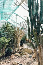 97 best cacti images on pinterest cacti garden plants and