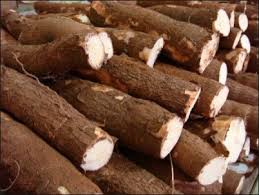 comment cuisiner du manioc tout sur la manioc origine conservation préparation consommation