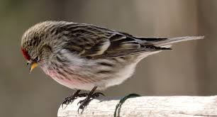 bird count at iiser mohali iiser mohali