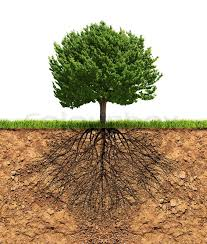 big green tree with roots in soil beneath growth concept stock