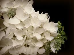 wedding flowers hd flowers wedding flowers white pretty loving black wallpaper