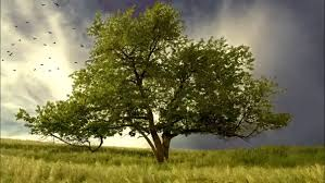 does the tree of knowledge still exist why or why not updated