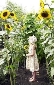 garden ideas tallest sunflower fairy garden ideas flower garden