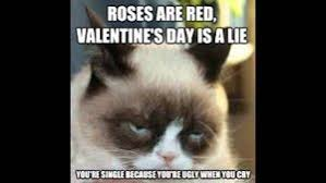 Angry Meme Cat - grumpy cat memes collection funny cool angry
