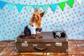 Traveling with your pet andover animal hospital veterinarian in