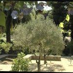 Mediterranean Backyard Landscaping Ideas Small Backyard Landscaping Ideas On A Budget