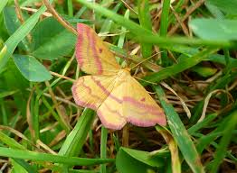 Moths In Kitchen Cabinets Moths Uconnladybug U0027s Blog