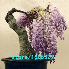 high quality ornamental trees sale promotion shop for high quality